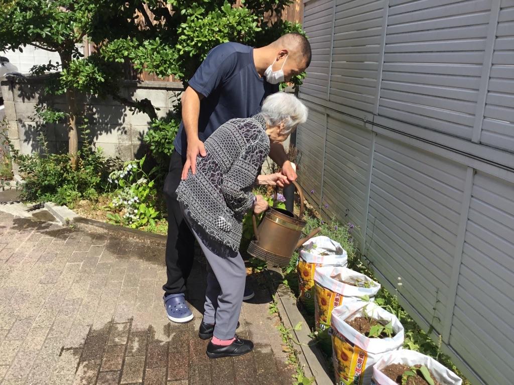 【門真】サツマイモ植え付け