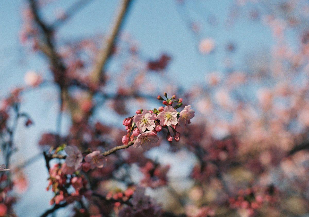 【長居公園】3月フィルム日記③🌸