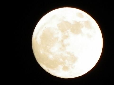 【門真】十五夜お月さん🎑