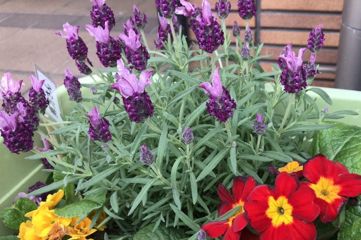 【長居公園】今、咲き誇る花たちよ