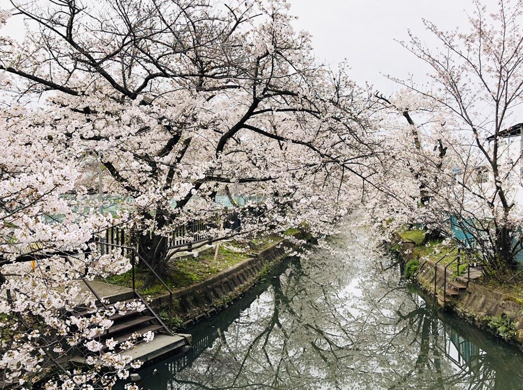 【門真】春ですね♪